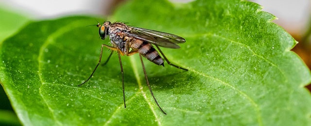 Know the Facts on Mosquitoes